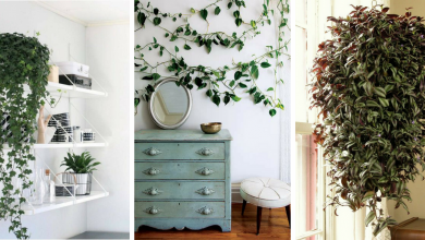Best good-looking indoor vine plants to bring nature to your place.