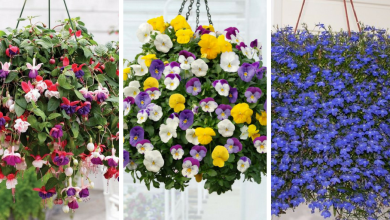 flowers to use in hanging baskets