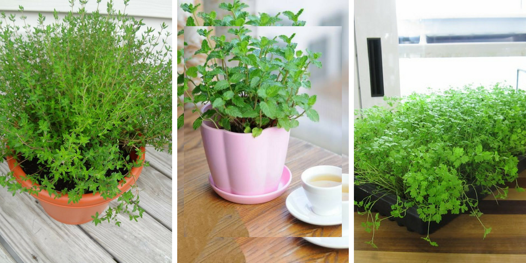 Best herbs to grow indoors - Best herbs to grow indoors ...
