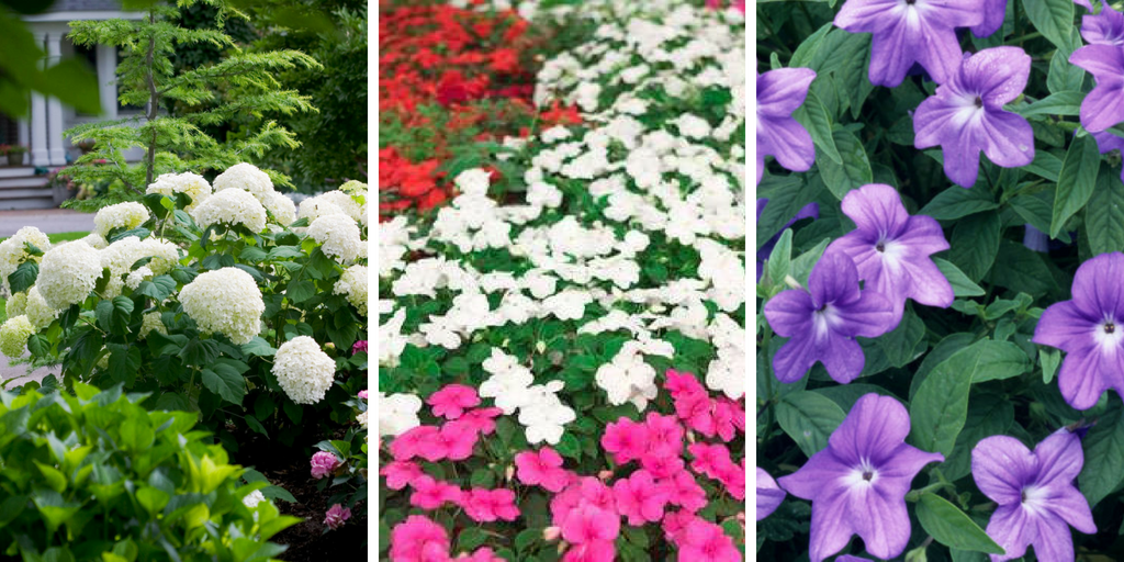 Shade-loving flowers The most 20 beautiful flowers that grow in shades.png