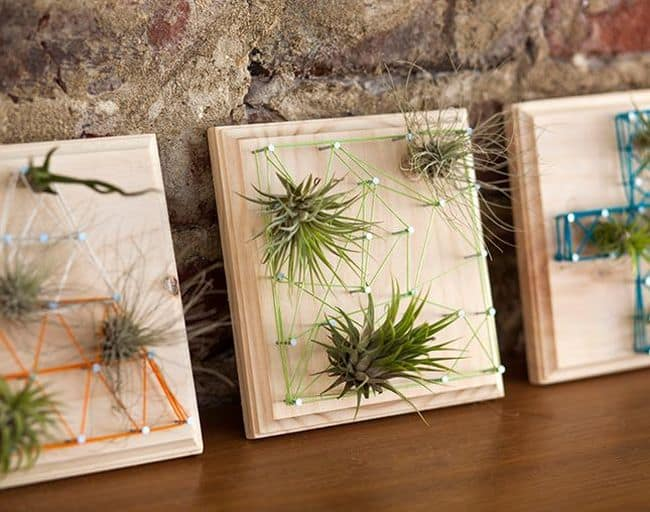 String Art Air Plant Display