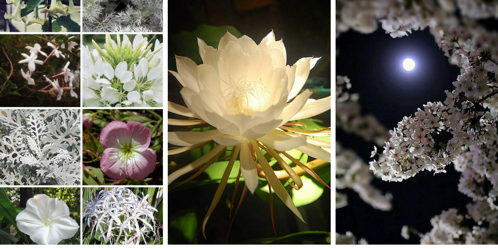 19 amazing flowers that bloom at night moon garden most flowers bloom during the daytime but there are some flowers that actually bloom at night mightylinksfo