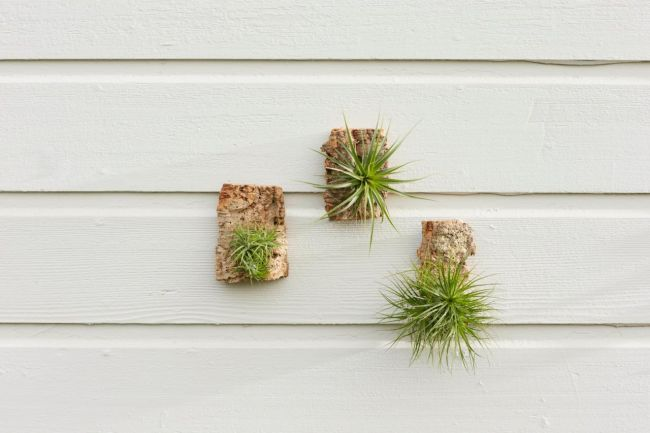 Wooden Air Plant Wall Art Display