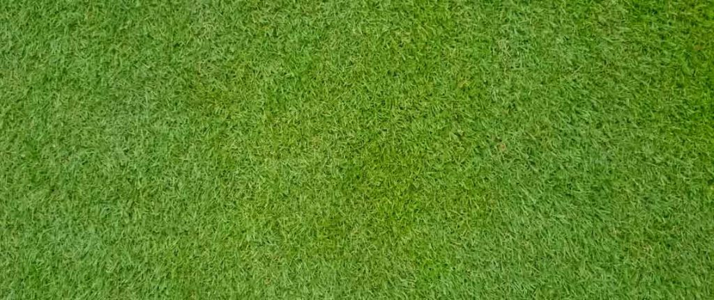 drought-resistant grass Bermudagrass