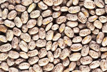 How To Grow Pinto Beans The Best Ways To Ensure A Heavy Yield