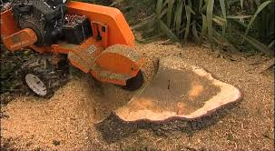 how to kill a tree stump through chopping
