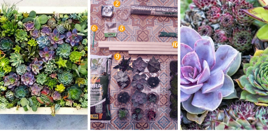 7 easy steps to create a decorative vertical succulent garden