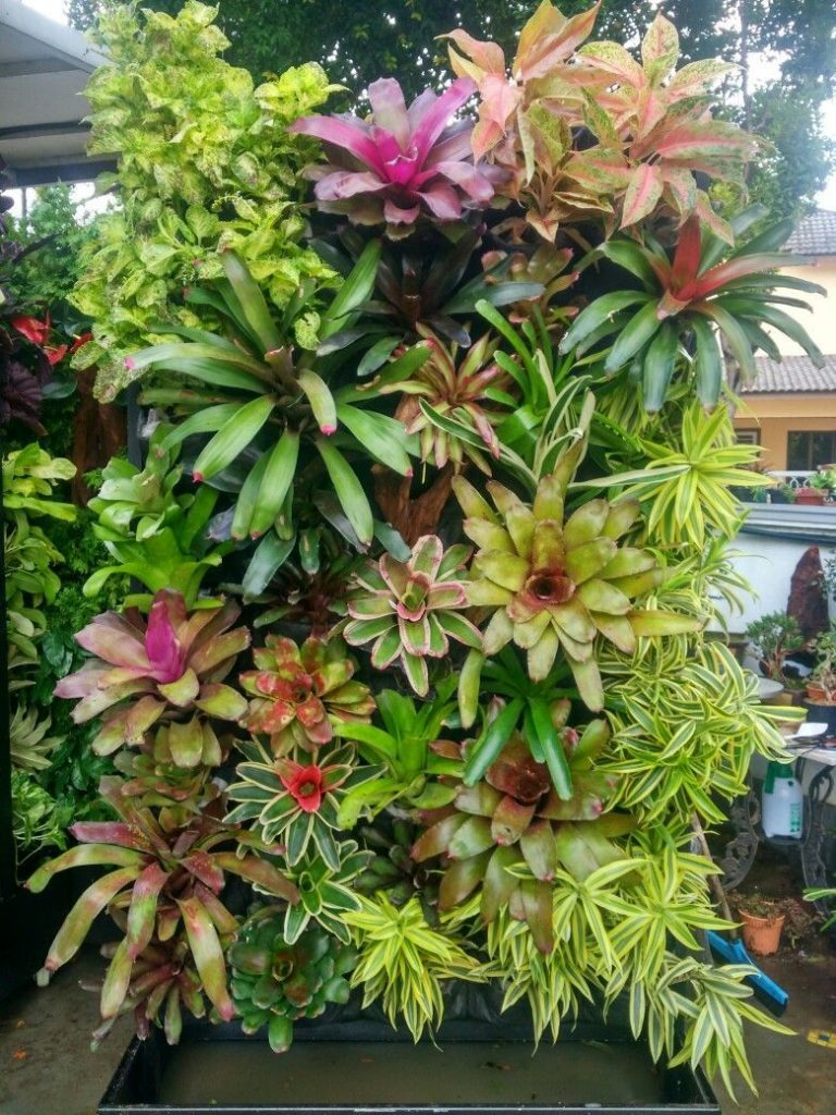 The most beautiful plants for ornamental vertical gardens what makes bromeliads perfect for vertical gardening is their shallow root system having a shallow roots system means these beautiful plants dont require izmirmasajfo