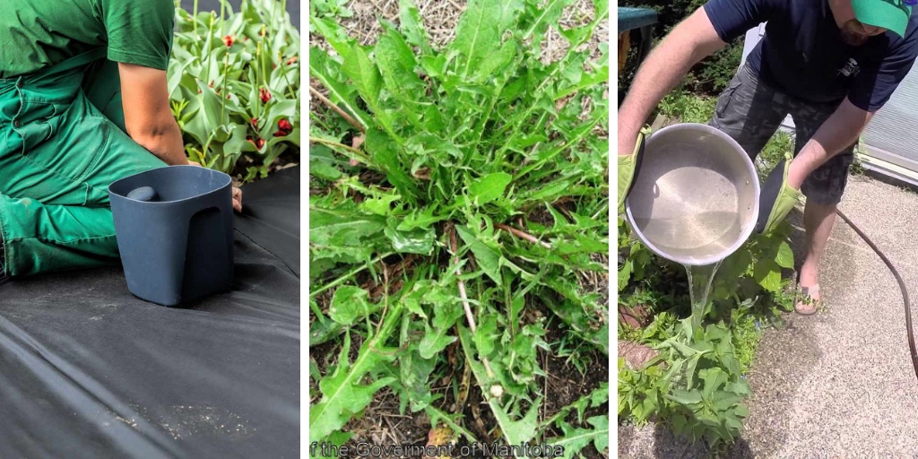 10 Crucial tips to remove weeds from your garden effectively