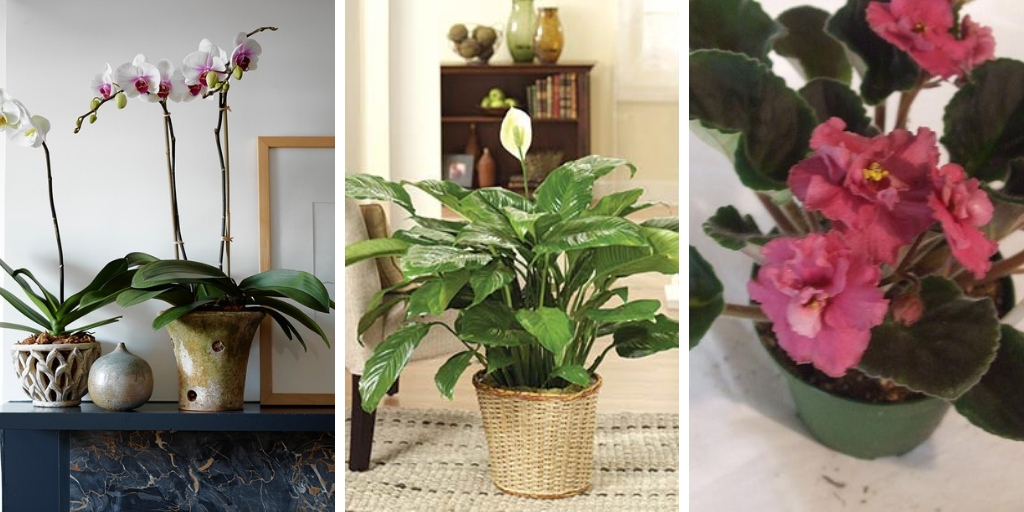 10 Fascinating shade-loving plants to decorate your indoors