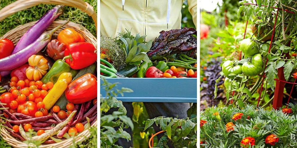 10 common vegetable gardening mistakes you should avoid