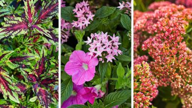 13 almost indestructible outdoor plants that you can't kill