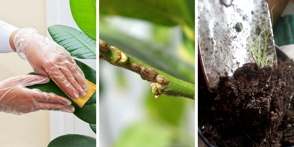 15 common mistakes that will kill your houseplants