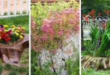 20 Impressive tree stump planters that you will love