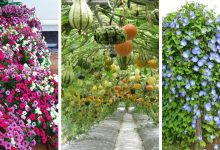 20 of the most adorable trellis plants that you should grow
