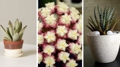 22 Decorative succulent plants that can grow without sunlight
