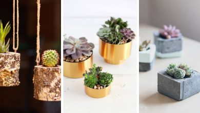 30 Fascinating Succulent planters you should definitely see