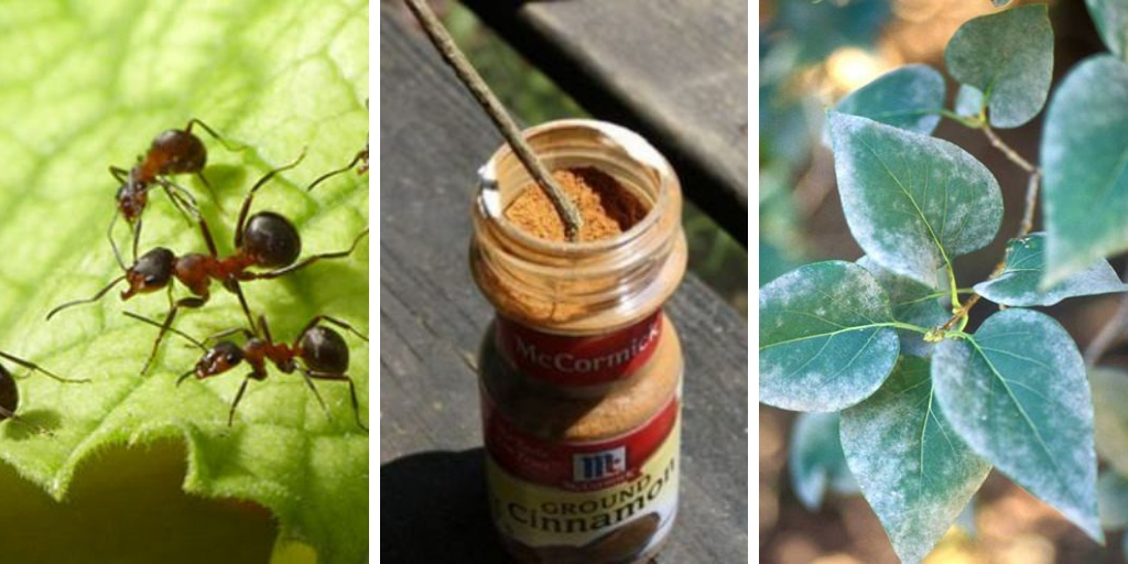 6 reasons why you should use Cinnamon in the garden