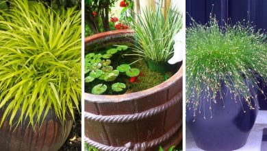 Growing Decorative grasses: Tips and the list of the most beautiful grasses