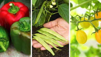 The Best Plants for vegetable gardens: Must-Grow plants