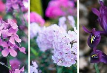 The best plants for cottage gardens: 18 wonderful plants