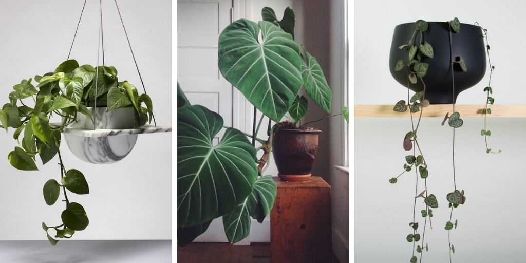 10 attractive heart-shaped plants to add romance to your indoor