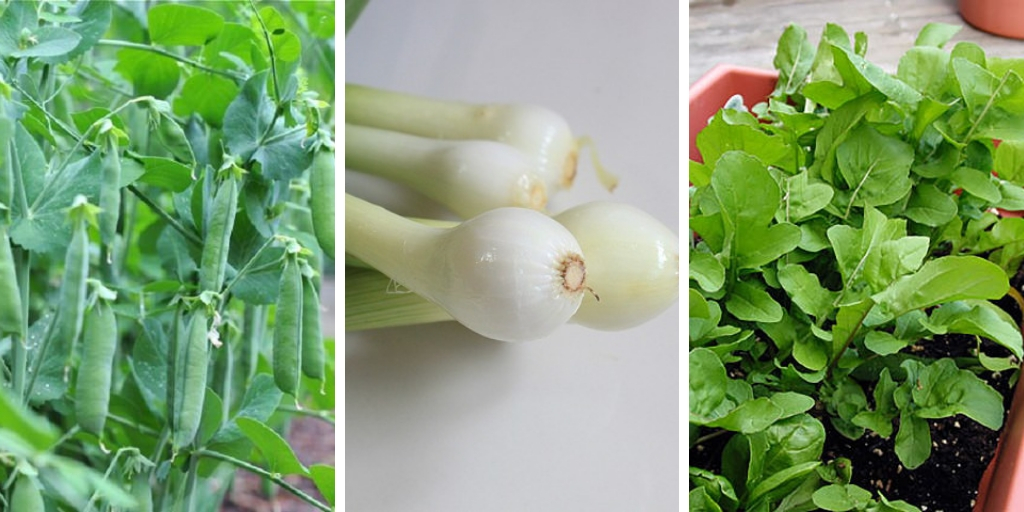 13 fast-growing vegetables that you can easily grow