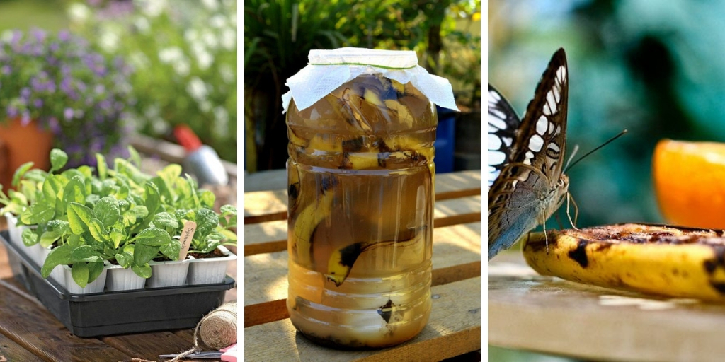 14 Amazing Banana Peel Uses in gardens
