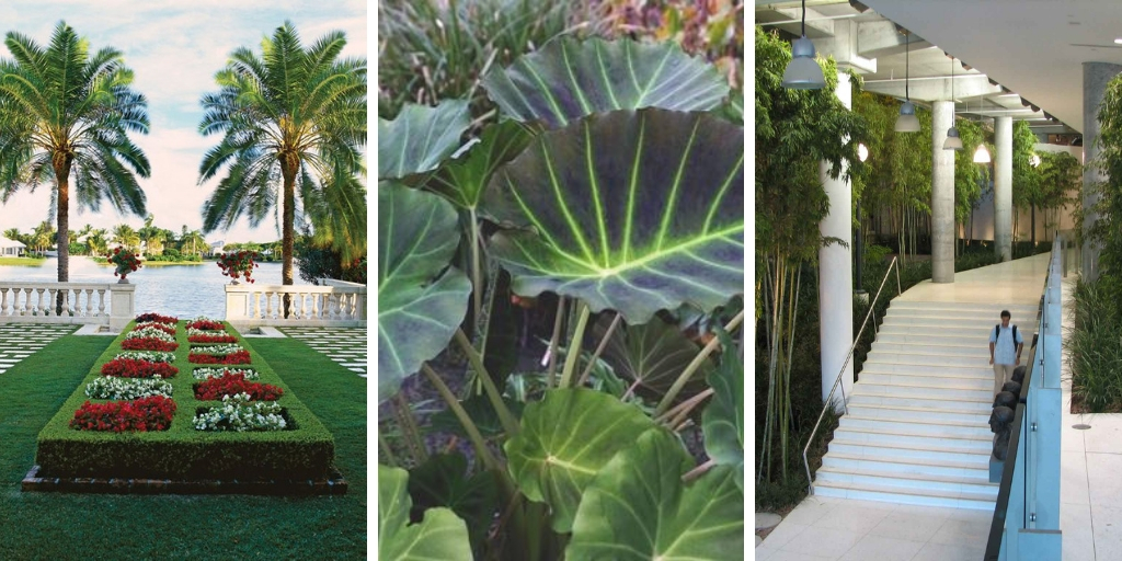 14 cold-tolerant tropical plants to adorn your garden