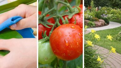15 Effective baking soda uses for plants in gardens