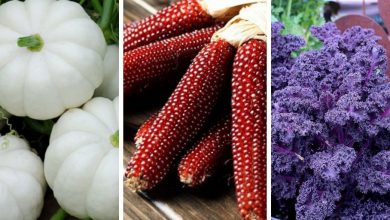 18 colorful vegetables that will decorate your garden