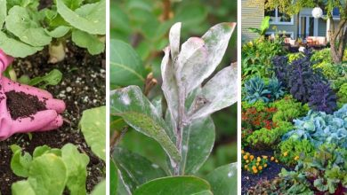 18 healthy coffee uses in gardens you should know