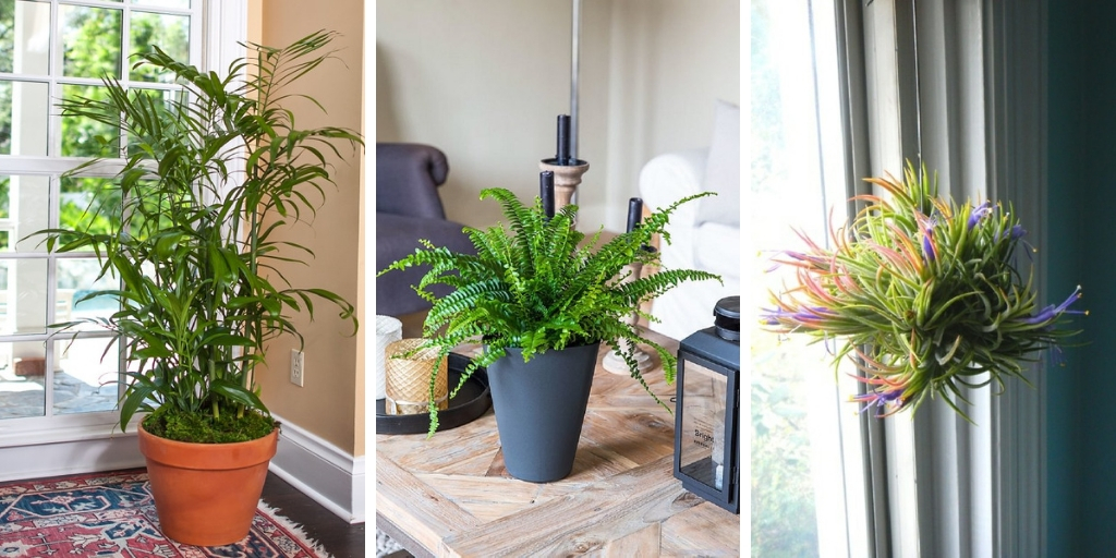 8 Beautiful plants to reduce humidity and decorate your place