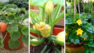 How to grow pumpkins in containers: A step-by-step guide