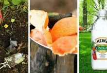 How to save money in gardens: 15 effective money-saving gardening tips