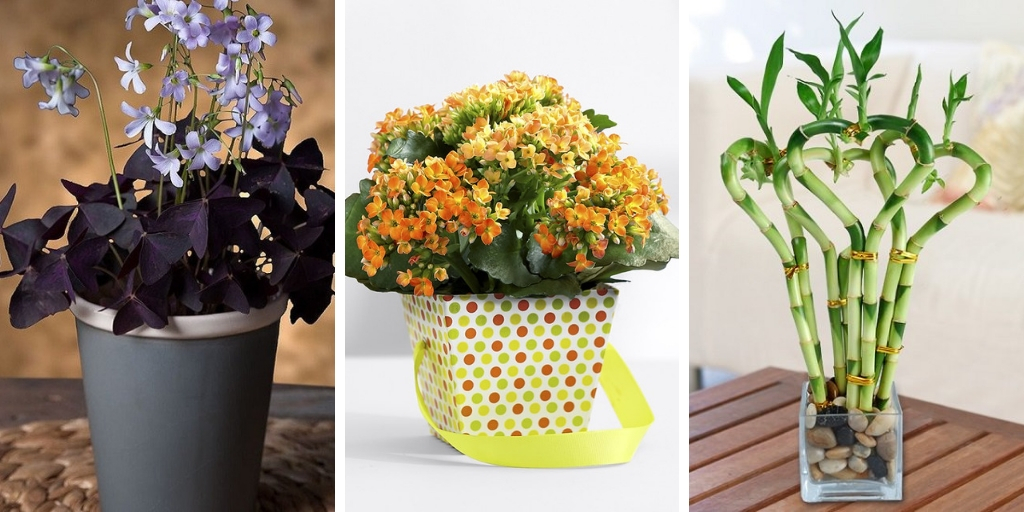 The most beautiful 15 desk plants to decorate your office
