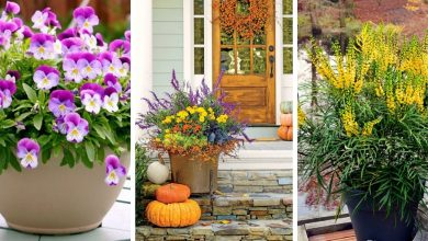The most beautiful fall flowers for container gardens