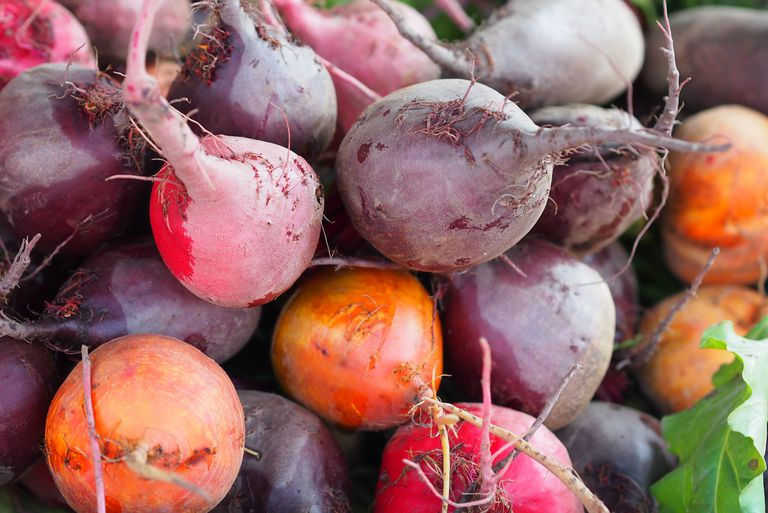 The most effective tips for growing Beetroot