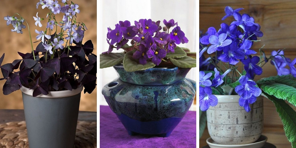 25 Wonderful Uncommon Houseplants you don't know