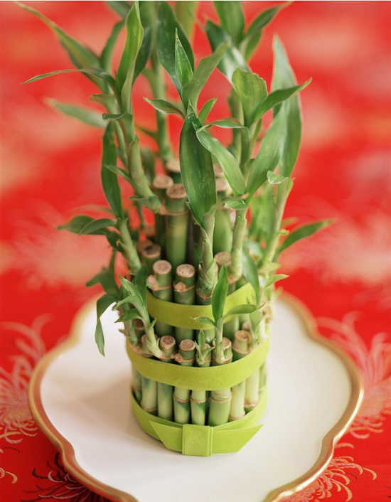 6 Of The Most Decorative Low Care Houseplants