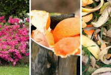 8 Fabulous Uses of Citrus Peel In Gardens