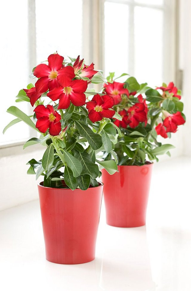 29 Wonderful Uncommon Houseplants you don't know