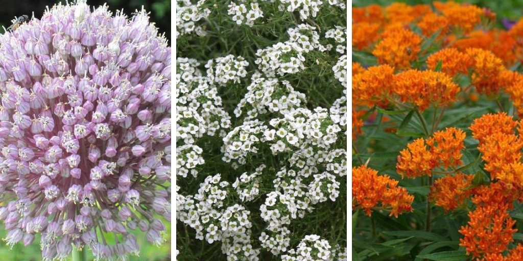 Top 10 Beautiful Plants That Attract Ladybugs