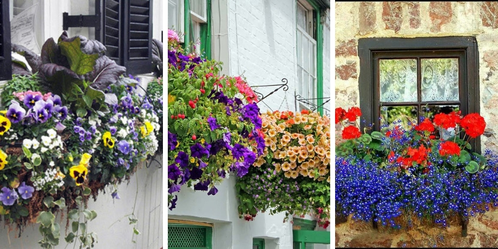 10 Of The Most Beautiful Flowers for Balcony Garden