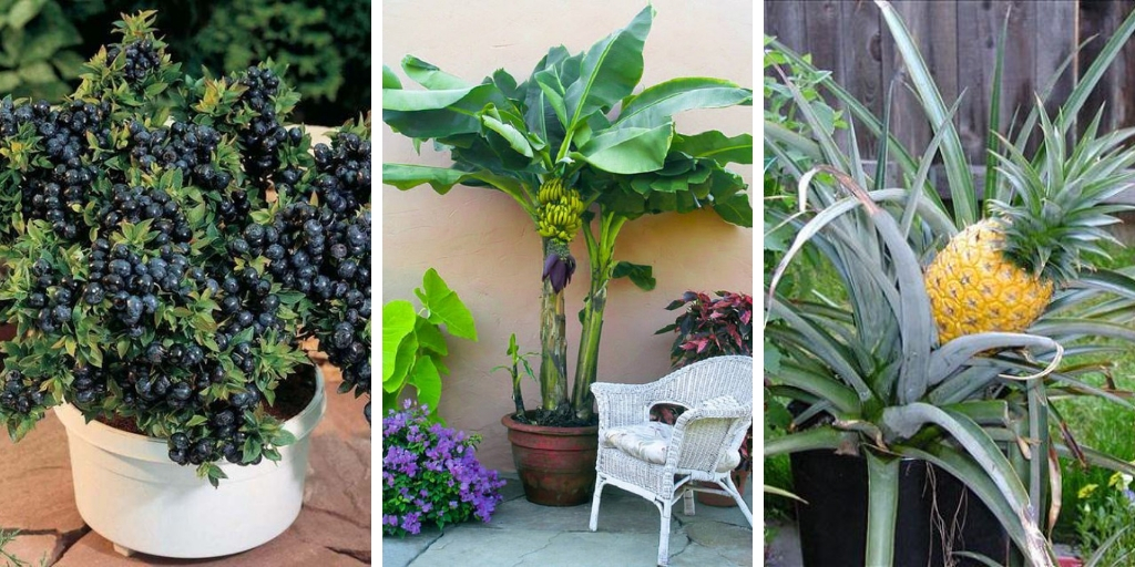 14 Healthy And Ornamental Fruits To Grow In Containers
