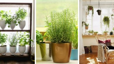 16 Fabulous DIY Indoor Window Gardens That Will Inspire You