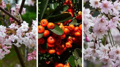 18 Winter Flowering Shrubs You Should Have In Your Garden