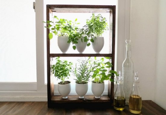 DIY Indoor Window Gardens 12
