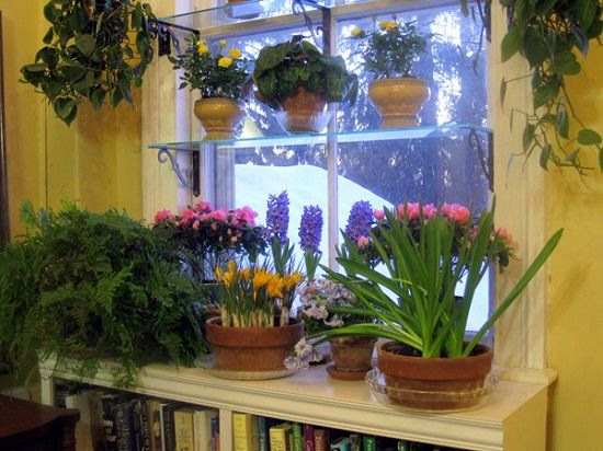 DIY Indoor Window Gardens 14