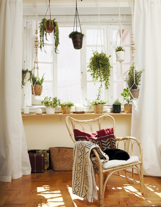 DIY Indoor Window Gardens 15